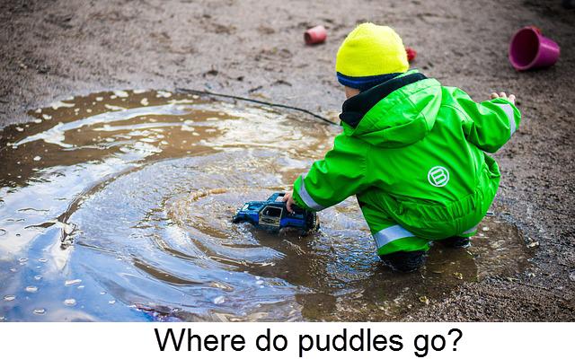 Where do puddles go