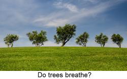 Do trees breathe